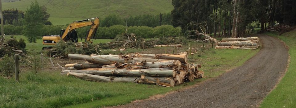 Farm Work, including Tree, Gorse and Brrom Removal, Track COnstruction and Creek Clearing