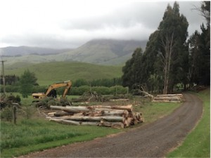Tree and Vegetation Removal